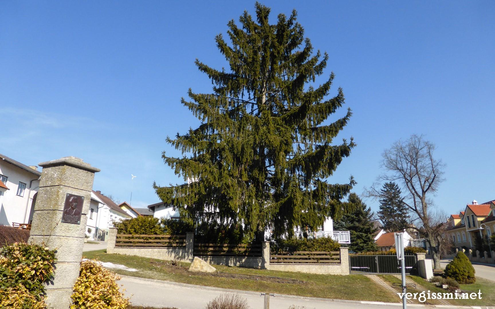 Kreuttal Rundwanderweg07 (Large)
